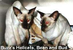 HellCatz Bean and Bud